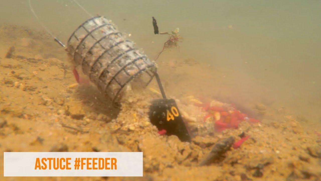 peche au feeder