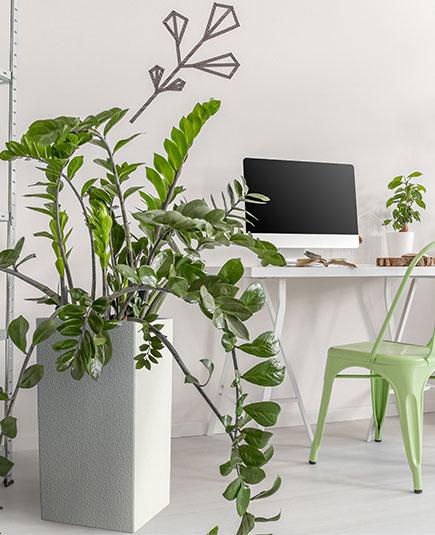 pot pour plante
