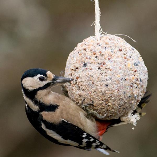 boule graisse oiseau