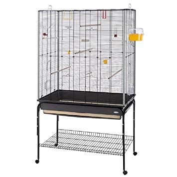 grande cage oiseaux