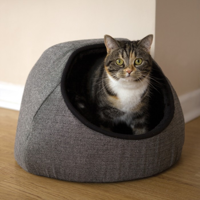igloo pour chat