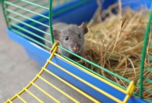 jeux pour rat