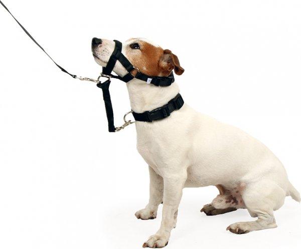 licol pour chien