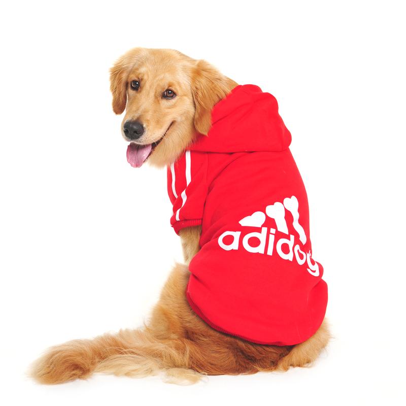 pule pour chien